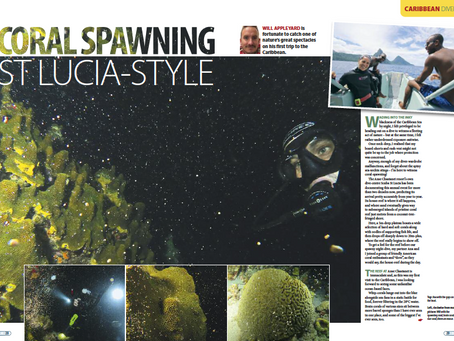 Coral spawning St Lucia : A feature for DIVER magazine