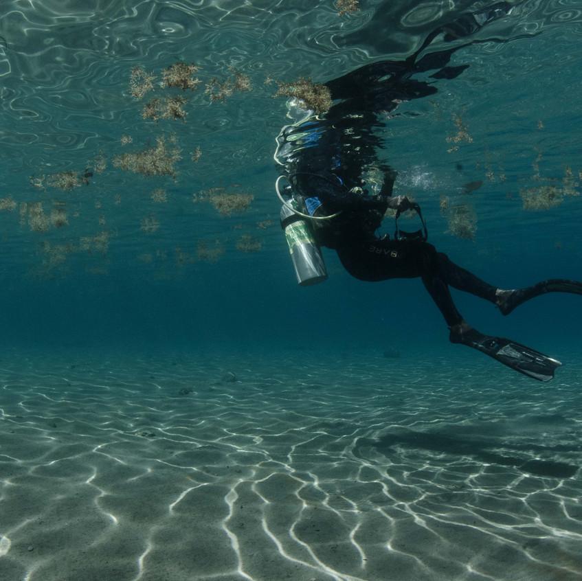 Caribbean diver