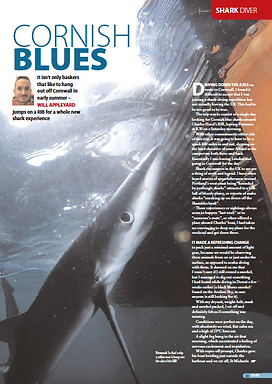 Cornish Blue sharks, a feature for DIVER magazine