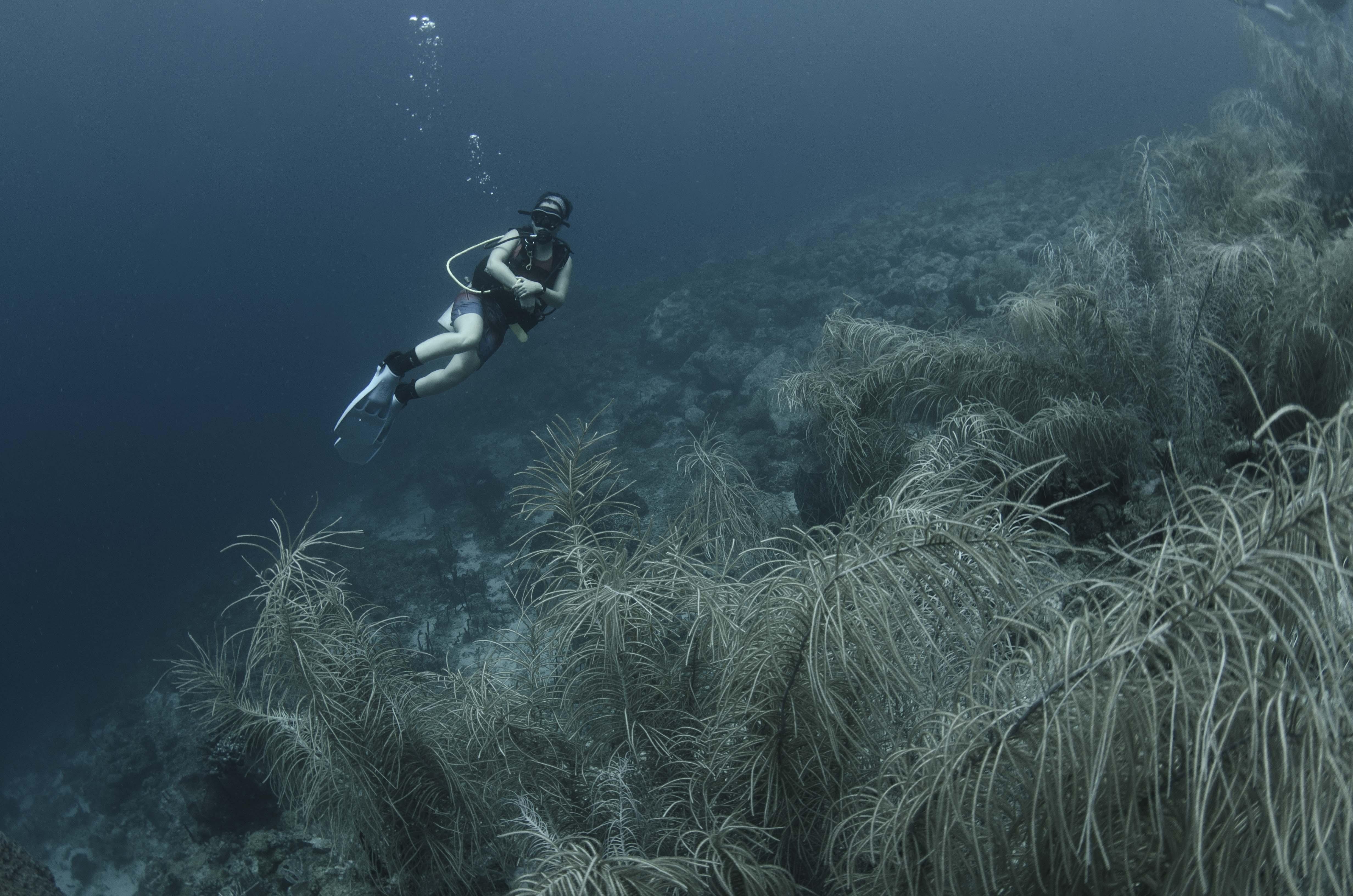 Saint Lucia Reef Diver