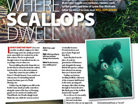 The effects of scallop dredging : A feature for DIVER magazine
