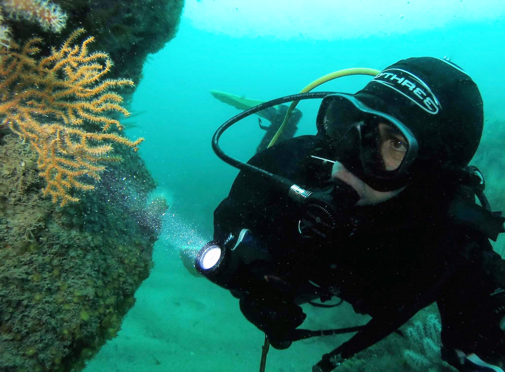 Pink sea fans are delicate and grow slowly