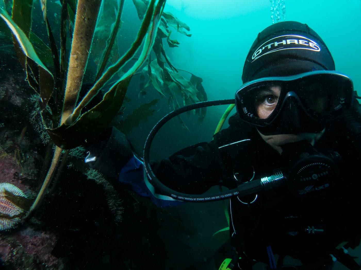 Kelp Forest Diver