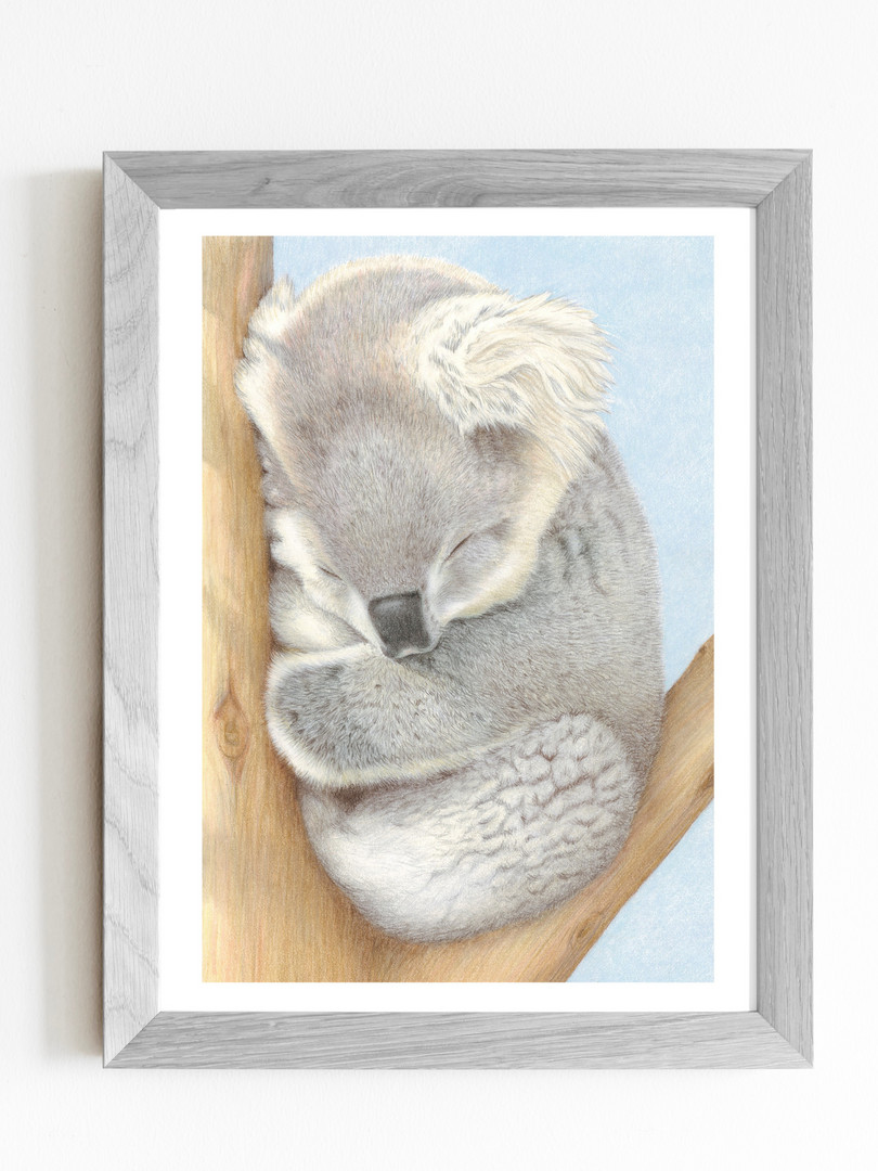 Cuddles Koala prints now available