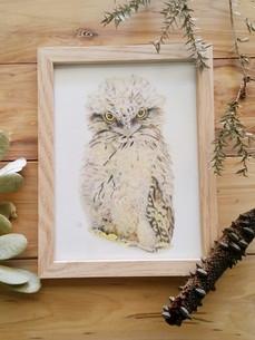 Australian Animal Prints