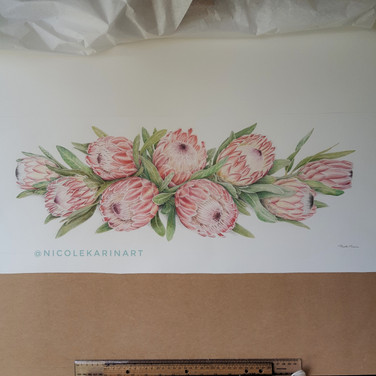 Proteas for Renee