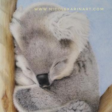 Koala Dreaming