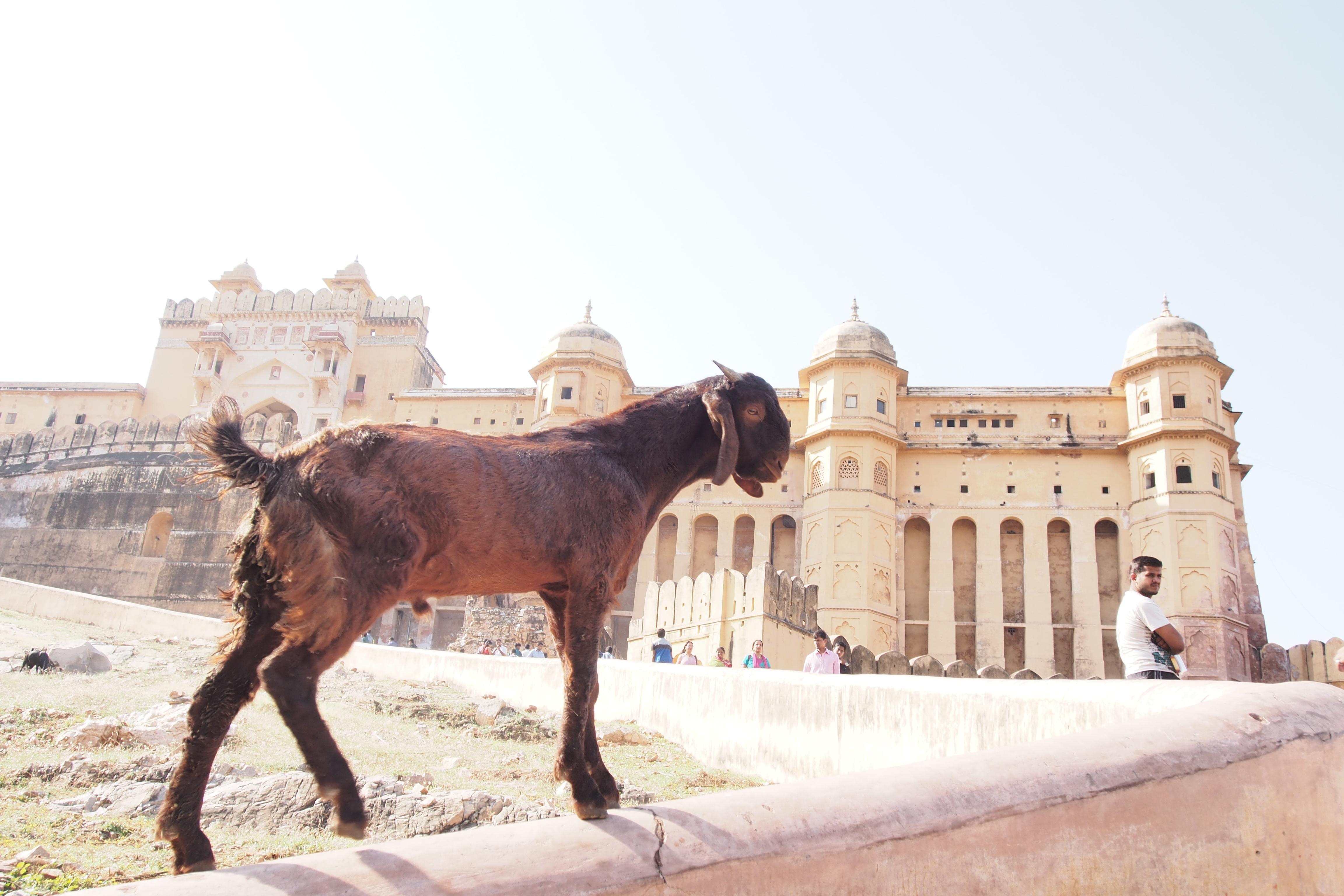 Jaypur India