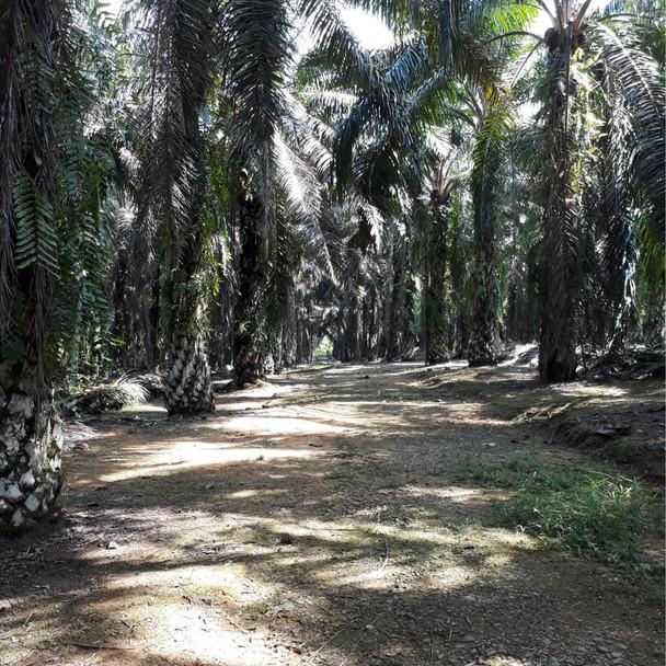Johor Agriculture.jpg