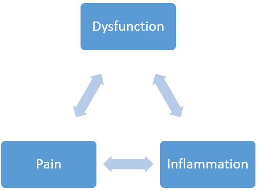 Dysfunction Inflammation Pain Cycle