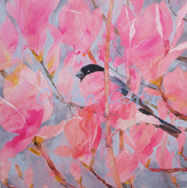 Bullfinch Magnolia
