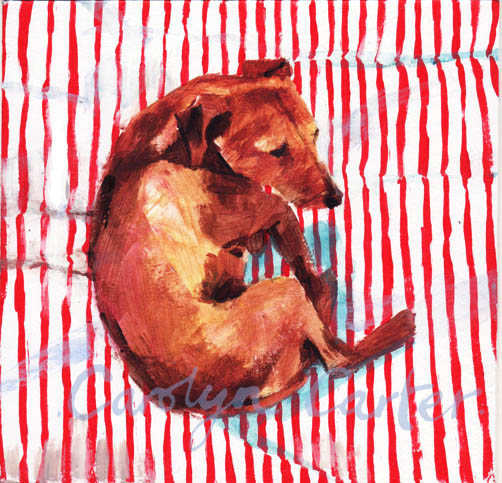 Dog On Stripe