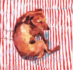 Dog On Stripe