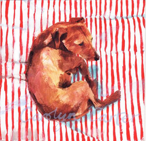 Dog Stripe