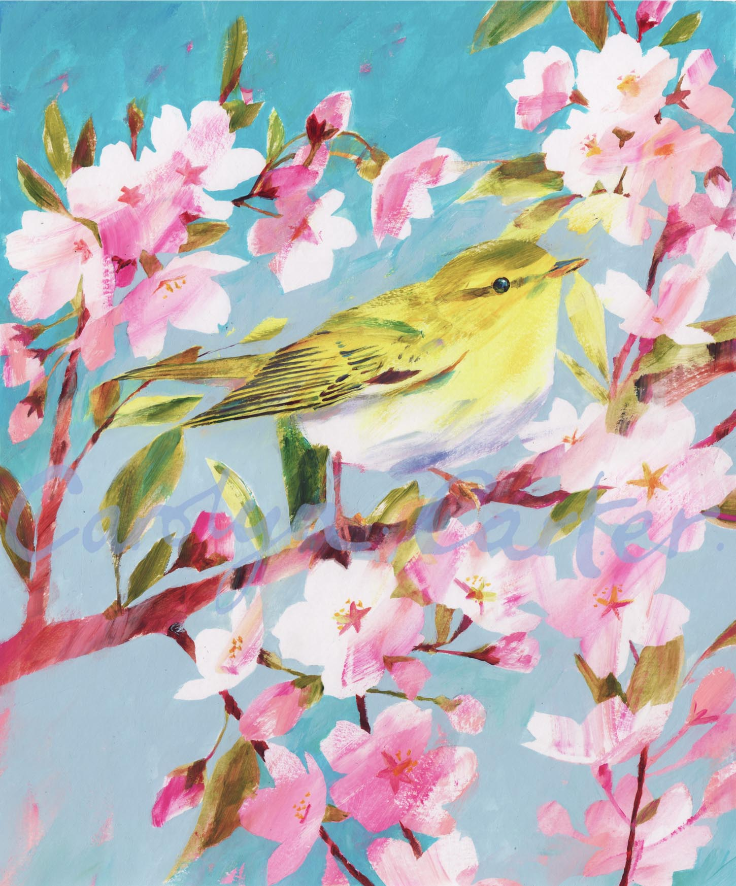 Wood Warbler by Carolyn Carter