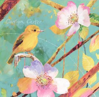 Rose Bird (Flycatcher)