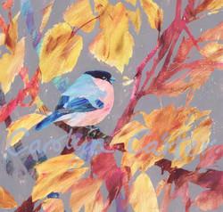 Bullfinch by Carolyn Carter