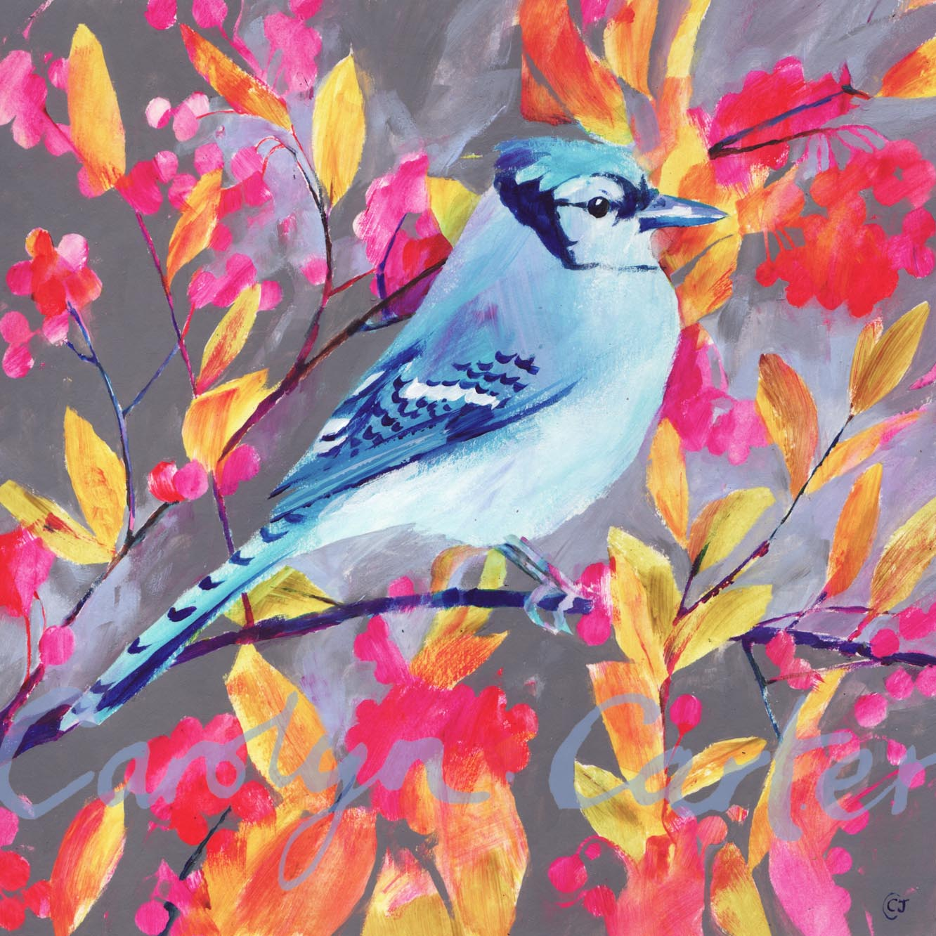 Blue Jay by Carolyn Carter