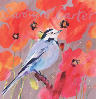 Poppies & Pied-wagtail