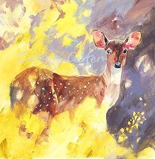 Deer'sGaze100.jpg