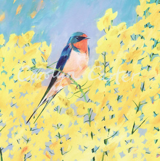 Swallow's Perch