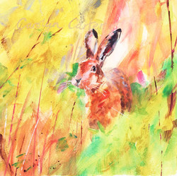 Springtime Hare