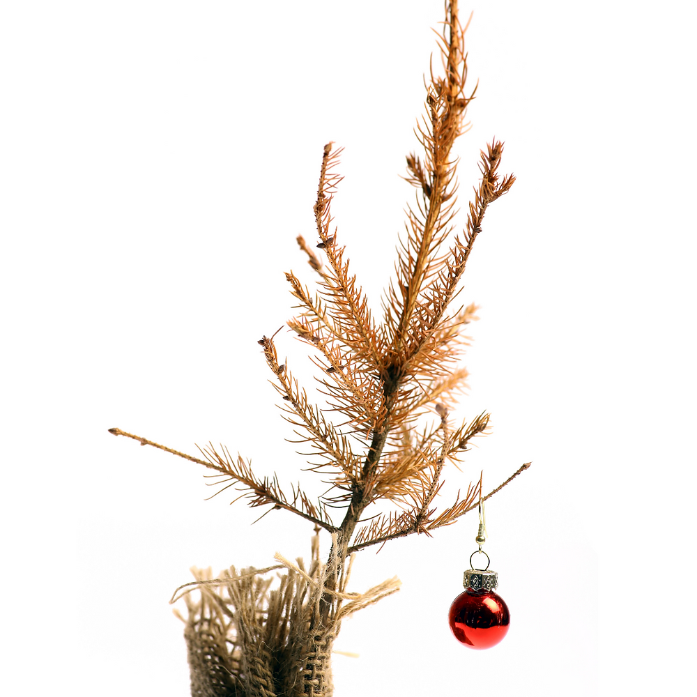 A forlorn dead Christmas tree with a single red ornament