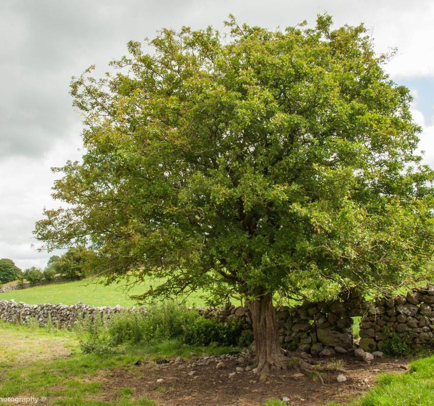 Roscommon Wall