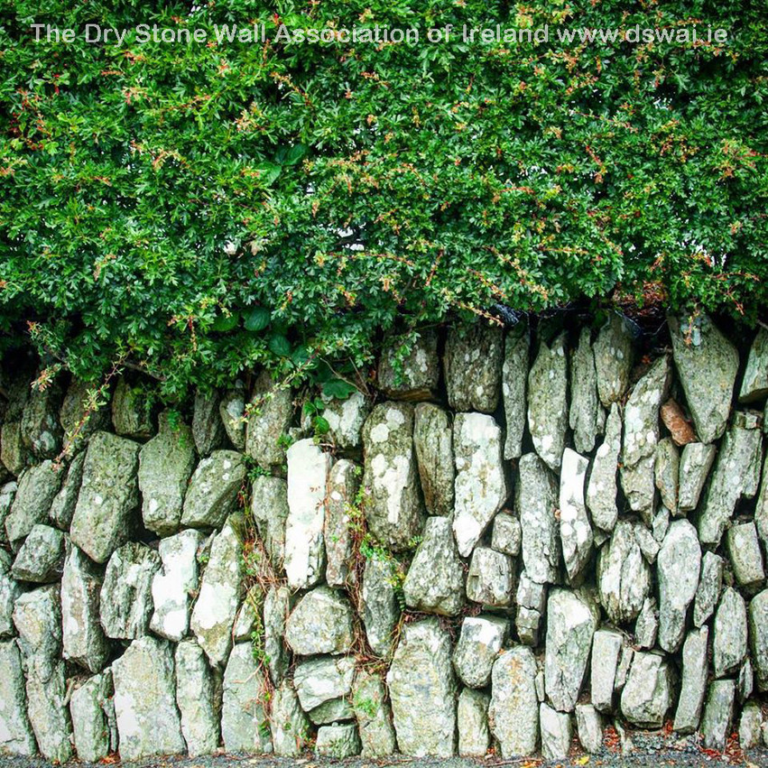 Wedged Wall Co. Louth
