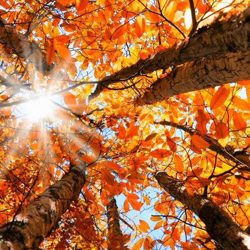 Fall Equinox ~ Virtual Gathering