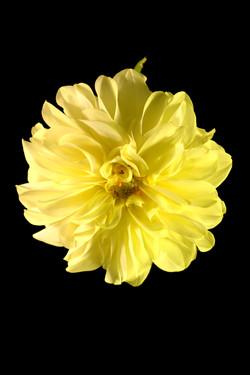 19. Objetos Flor