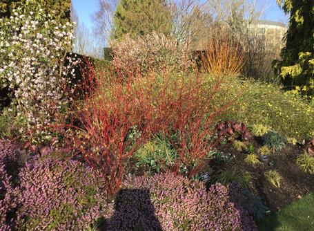 A masterclass in Winter interest gardening
