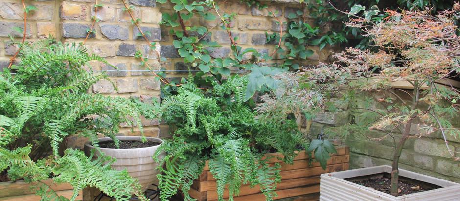 Virtual Garden Consultation Reports