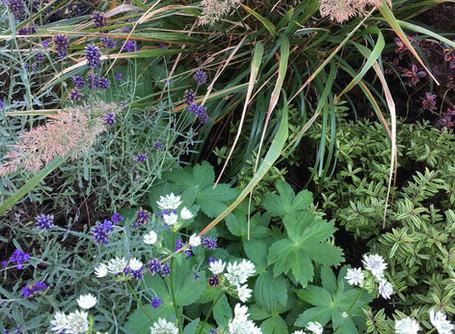 E2 Canalside Planting - an evolving communal garden