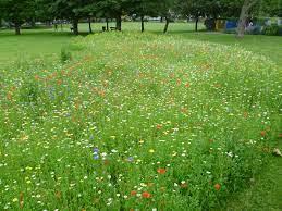 Creating a wildflower meadow in an urban garden