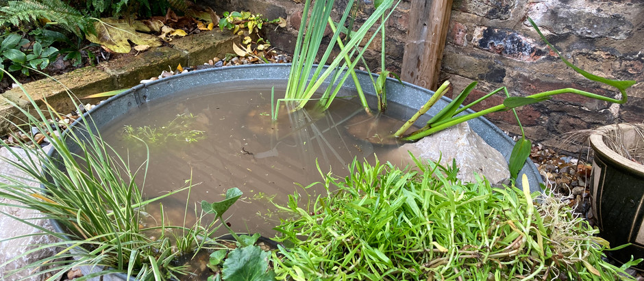 Building a container wildlife pond