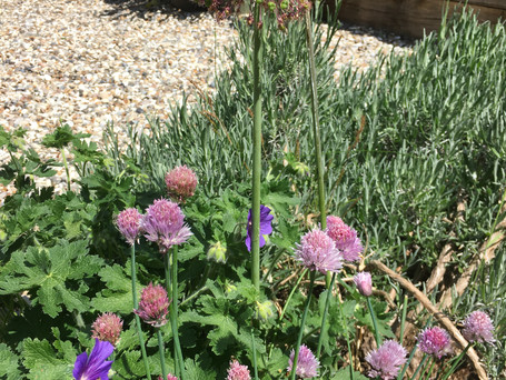 Tips for creating drought tolerant gardens