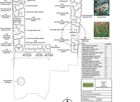 Choosing plants for my N12 Dog Friendly Garden