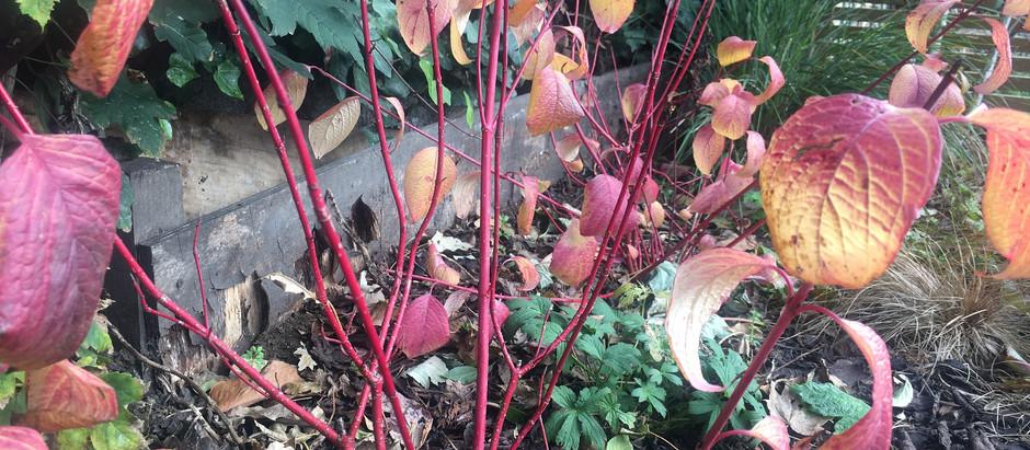 Planting for Winter interest