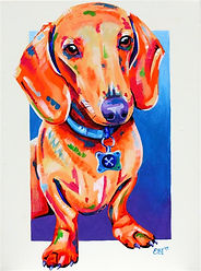 Dachshund portrait, Paintings of animals, Pet Portraits Australia, Evei Art, Eve Izzett