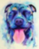 Staffy paintig, Dog portraits, Pet portraits, Australian artist, Evei Art, Eve Izzett