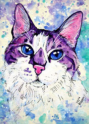 Watercolor cat painting, Custom pet portraits in Australia, Cat art, Animal art, Evei Art, Eve Izzett