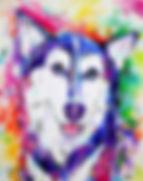 Husky dog, Husky painting, Custom pet art, Pet portraits Australia, Evei Art, Eve Izzett
