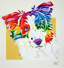 Border collie, Pet portraits in Australia, Pet portraits from photos, Evei Art, Eve Izzett