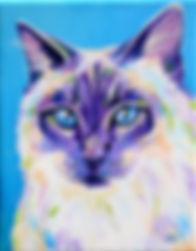 Ragdoll cat, Cat portraits, Pet portraits Australia, Evei Art, Eve Izzett