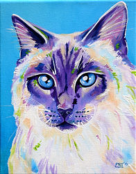 Ragdoll cat, Cat portraits, Pet portraits Australia, Evei Art, Eve Izzett