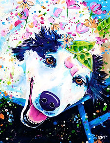 Custom dog portrait from photograph australia and international.  Border collie painting.