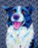 Pet portraits Australia, Pet portraits from photos, Border collie art, Evei Art, Eve Izzett