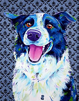 Border collie art, pet portraits from photos, custom pet portraits australa, Evei Art, Eve Izzett