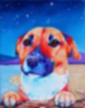 Dog on the beach, Stars, Pet art, Evei Art, Eve Izzett